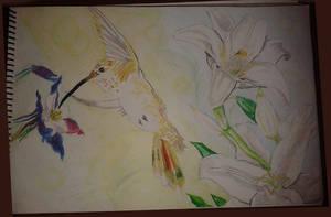 Colibri a lapices oleo pastel