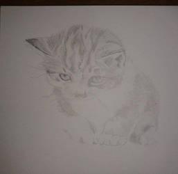 gatito a grafito