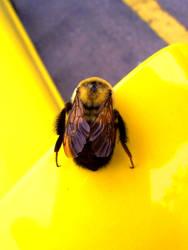 Yellow Bumble Bee by Steven-Kouto