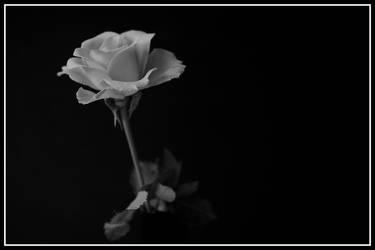 Quiet Life by zemoto