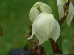 Exotic Flower by kirablack