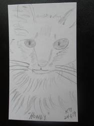 Friends Cat Honey
