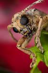 Longhorn beetle by orionmystery