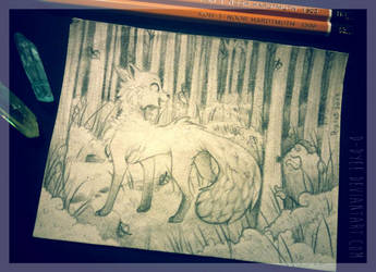 Fox In The Sketchy Forest by D-Dyee