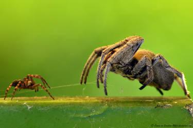 Little Spider and BIG Spider by Creative-Addict