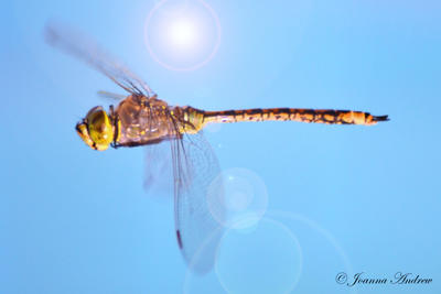 Yellow Dragonfly by Creative-Addict