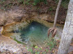 A spring from Silver Springs