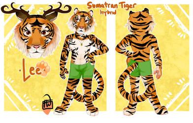 Sumatran Tiger Ref comm .front back+bust.