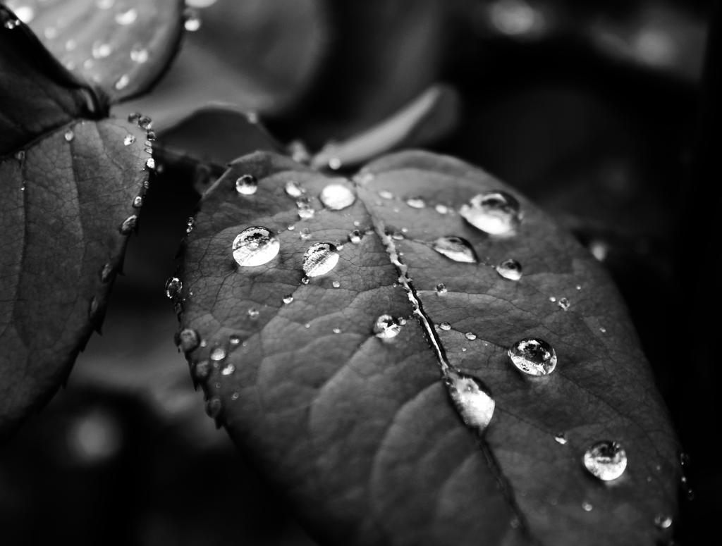 Leaf by Ginwopesha
