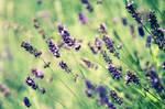 -violet love-