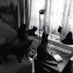 It's a cats life!