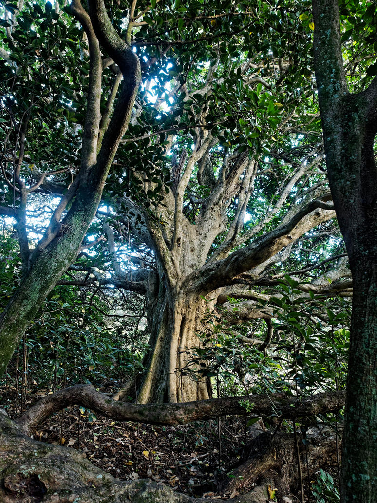 Some tree near gemstone cove by Deceptico