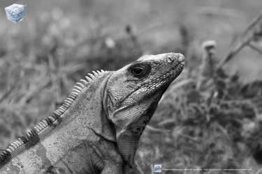 Tulum Lizard by aladecuervo