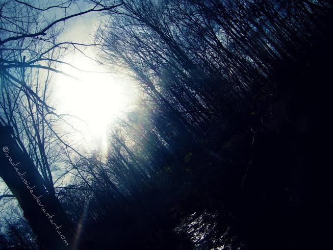 Mono-Trees by IveDiedInside
