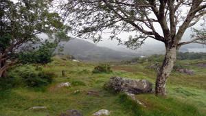 Misty Landscape 17