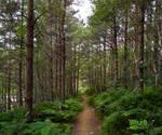 Landscape Woods 22