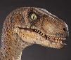 Jurassic Park-Velociraptor (M) [Clarence] V.1 by Asuma17