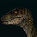 Jurassic World - Velociraptor. nublarensis [Alpha] by Asuma17