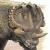 John-Sibbick-Centrosaurus (retro) [V.1] by Asuma17