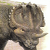 John-Sibbick-Centrosaurus (retro) [V.1]