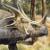 Styracosaurus [V.1] by Asuma17