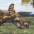 Triceratops [V.1]