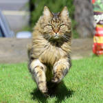 Cats in Action 7