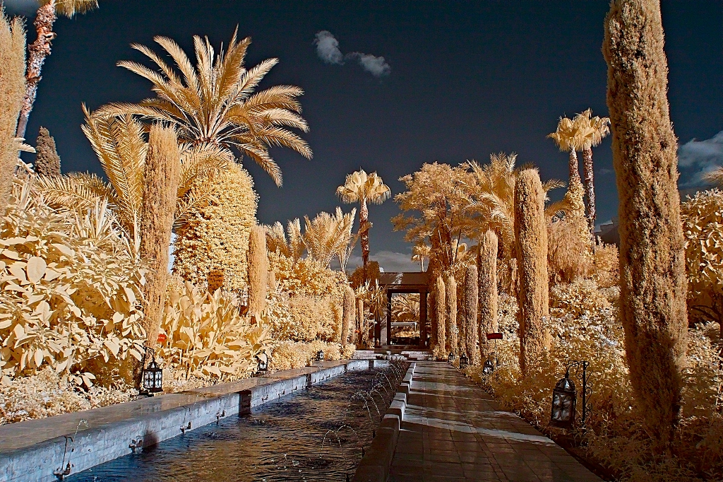 Maroko - Page 2 Ir_morocco_trees_2_by_okavanga-d462tvb