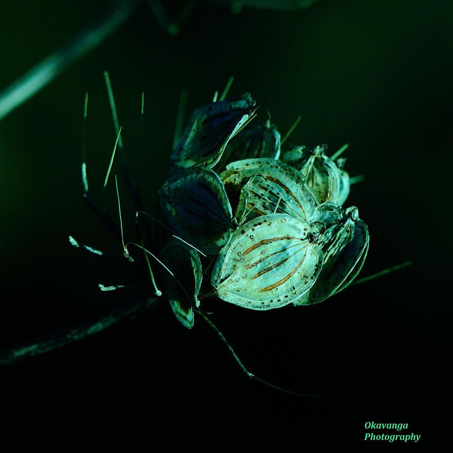 Seed Heads 6 by Okavanga