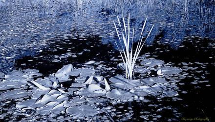 Infrared Lily Pool by Okavanga