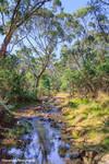 Morses Creek 2