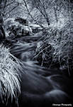 Infrared Burns and Rivers 2