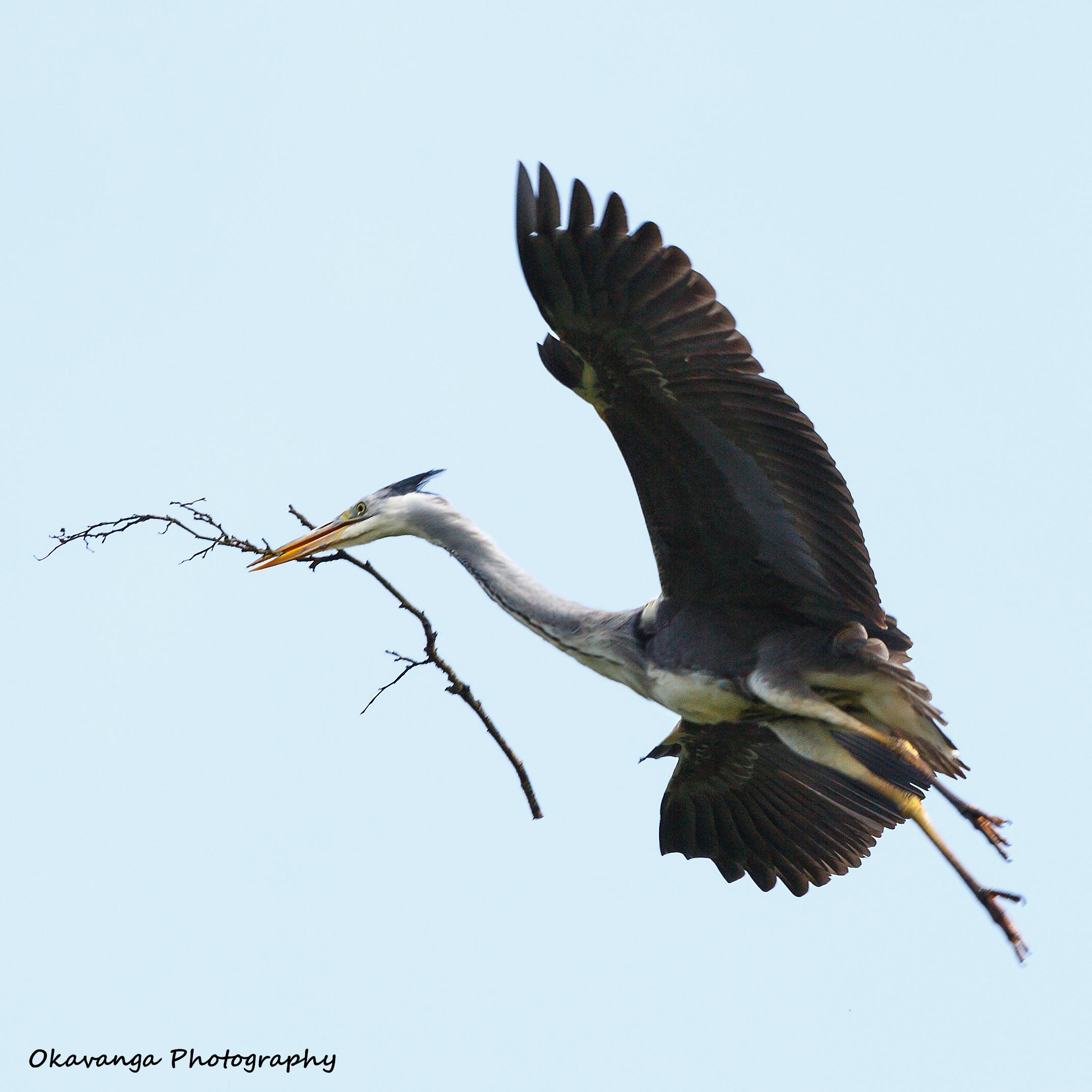 Heron 1 - The Repairman by Okavanga
