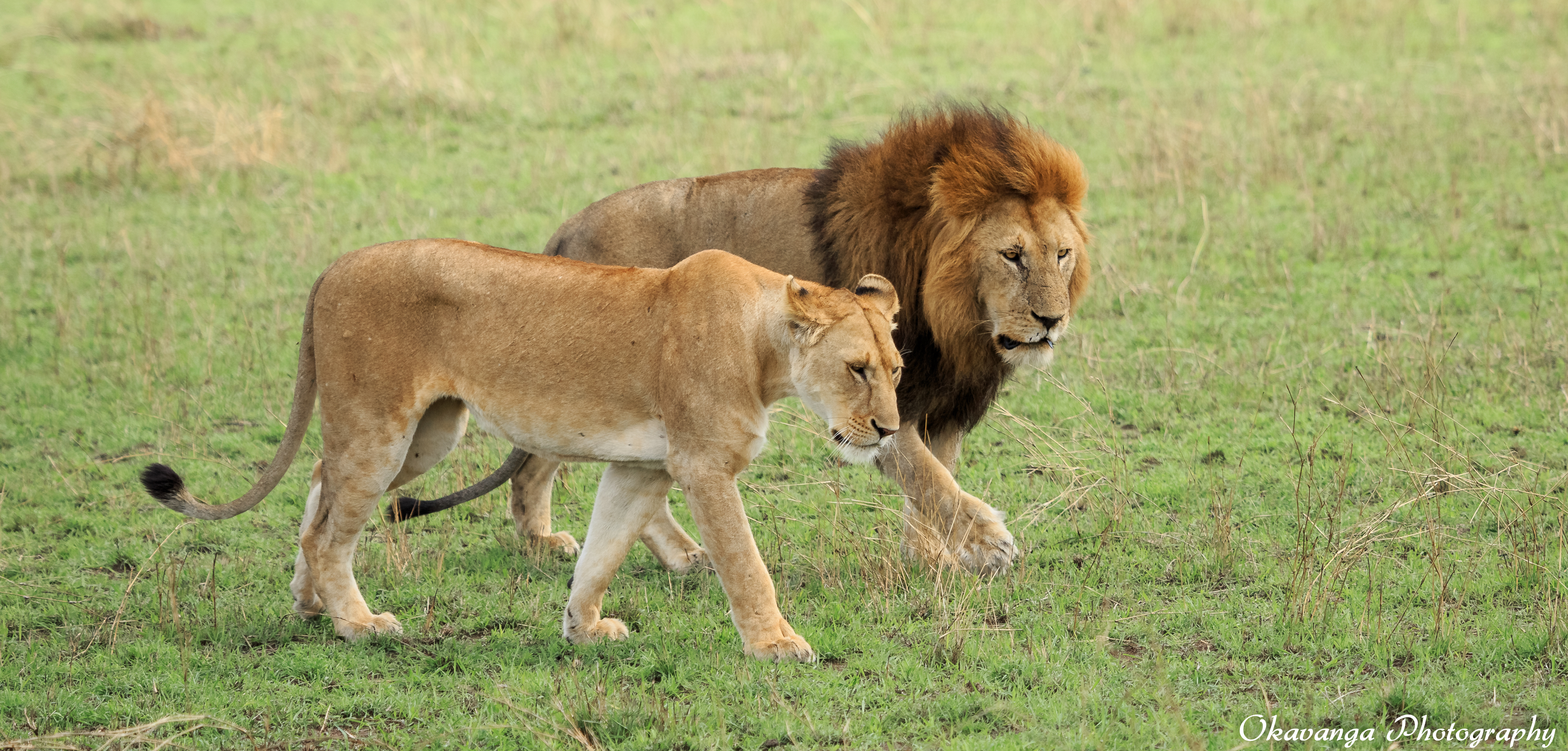 Wild african safari sex orgy 6
