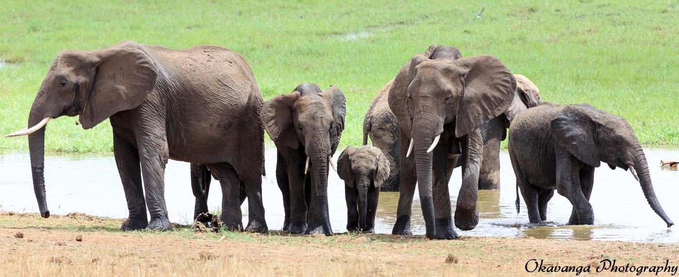 N F Elephant 2 Tarangire Wetland Elep...