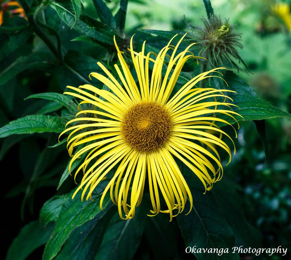 EOS M Super Takumar 9 Flower by Okavanga