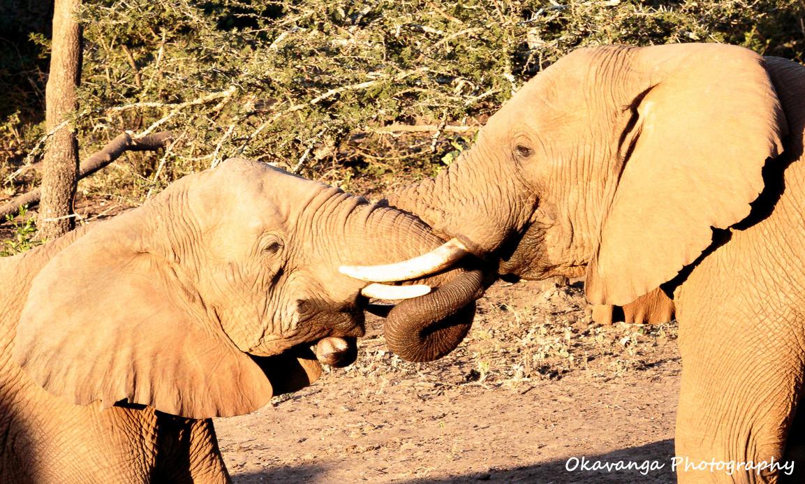 The Kiss by Okavanga