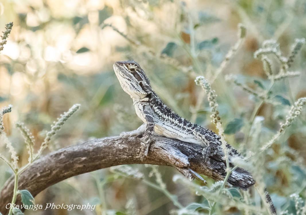 Lizards R Us! by Okavanga on DeviantArt