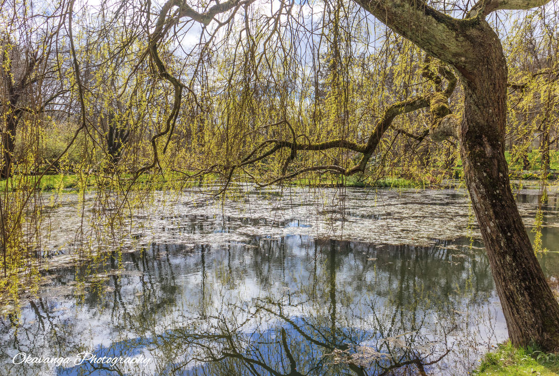 Bodnant Willow Reflections by Okavanga