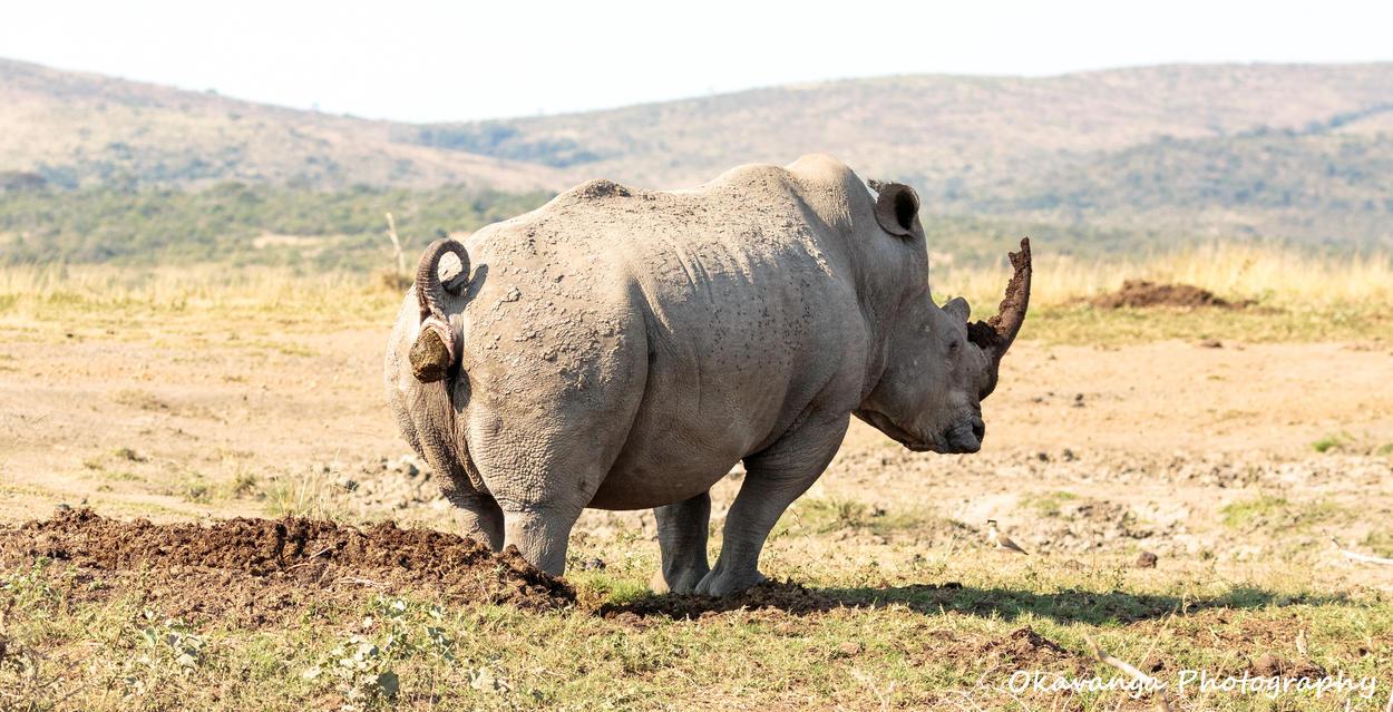 Mr Big Piles It On by Okavanga