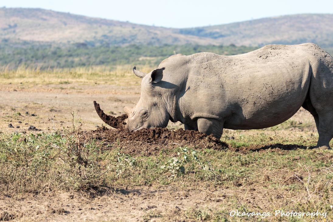 Mr Big at Work. by Okavanga