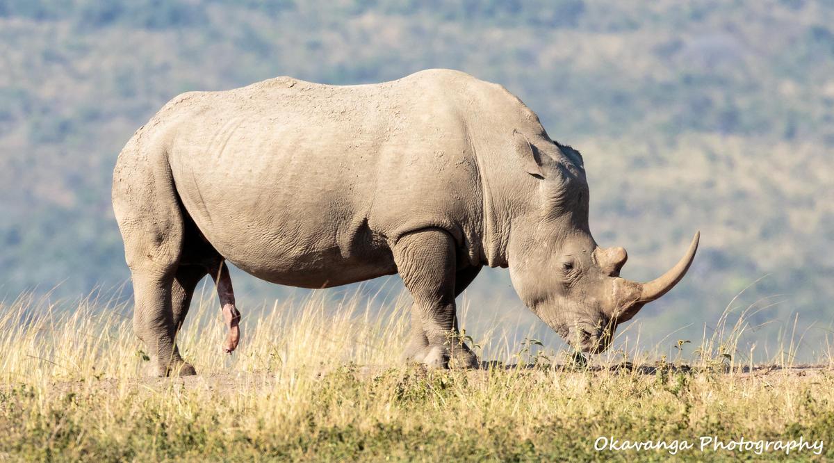 Mr Big Displays His Prowess by Okavanga