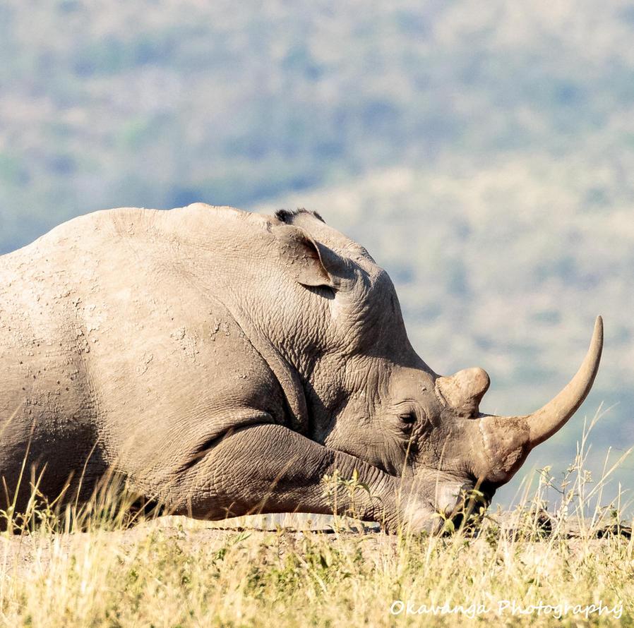 Mr Big Wakes Up by Okavanga