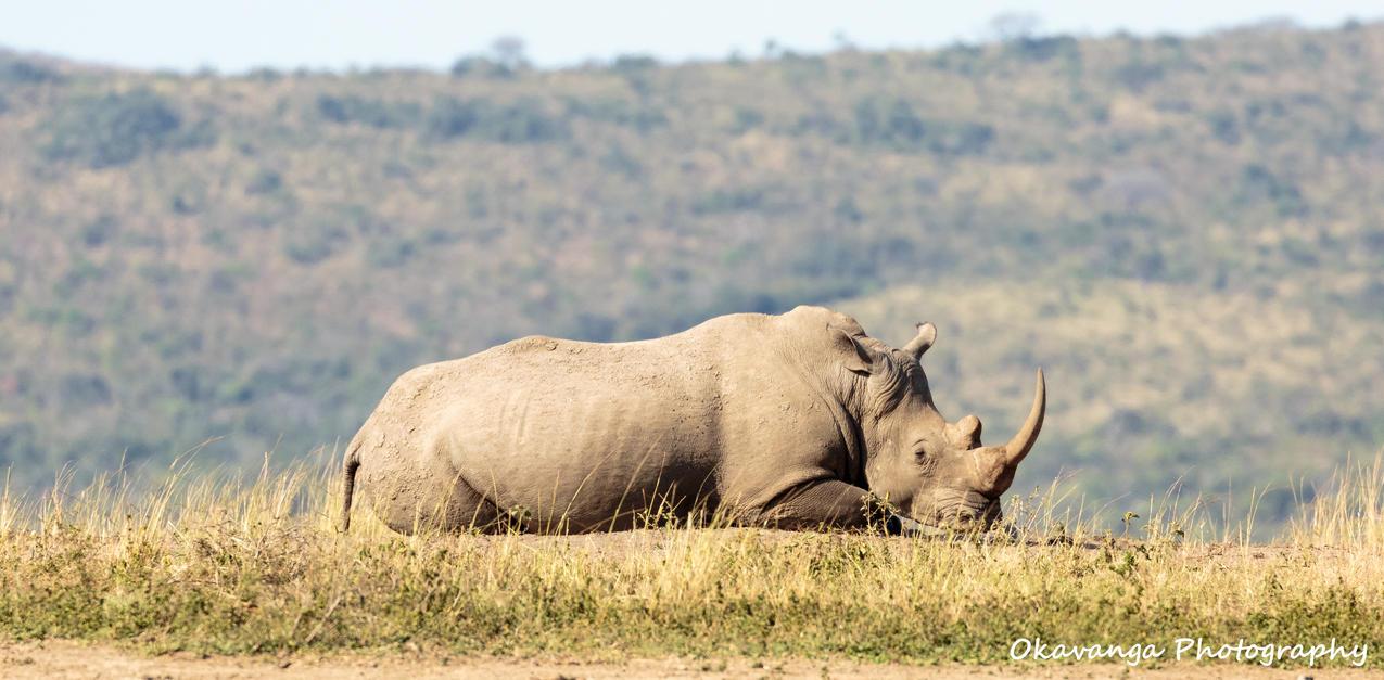Mr Big Napping by Okavanga