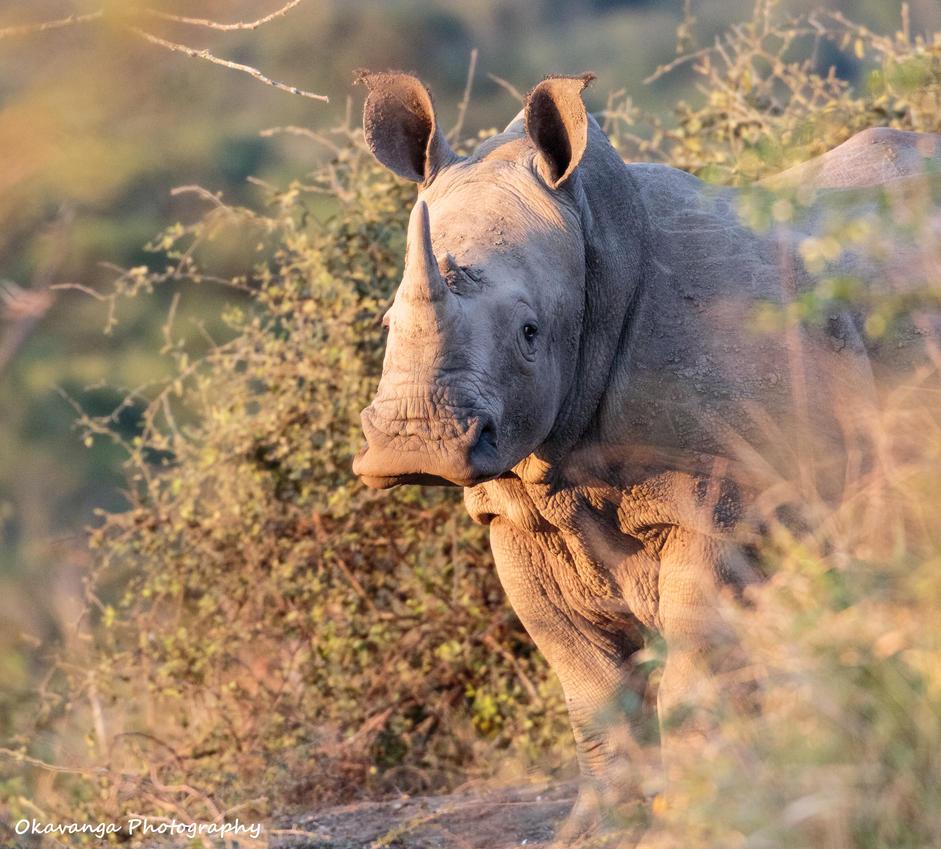 Watching Brief by Okavanga