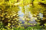 Dream Smooth - River Stour Lily Pond