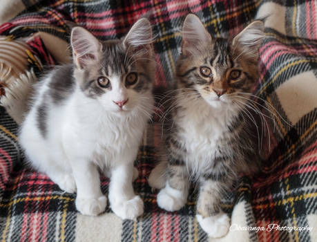 Prim and Proper Sam and Tabitha