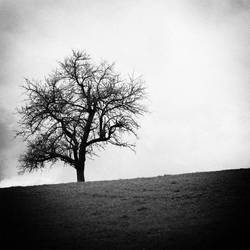 Solitary by GTRacer