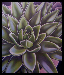 Succulent by visionality