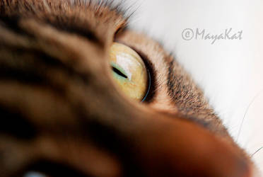 Chamalow's eye by StRaNgEMiAoU